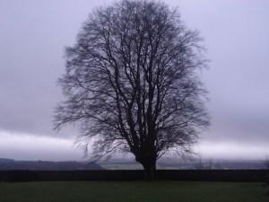 Tree_December